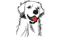 Goldie Doggy von OhMyCS Sketch